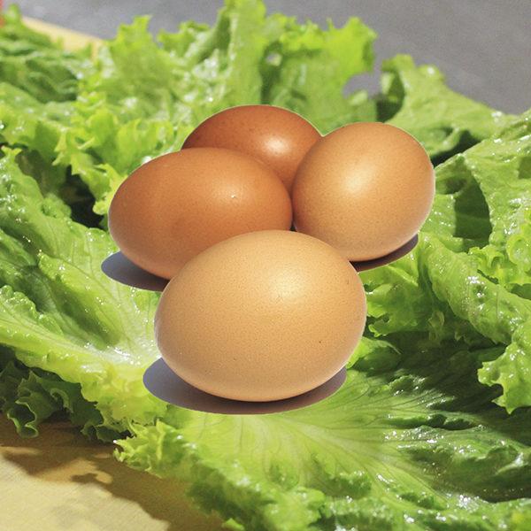 huevos final